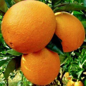 arance_biorfarm_frutta