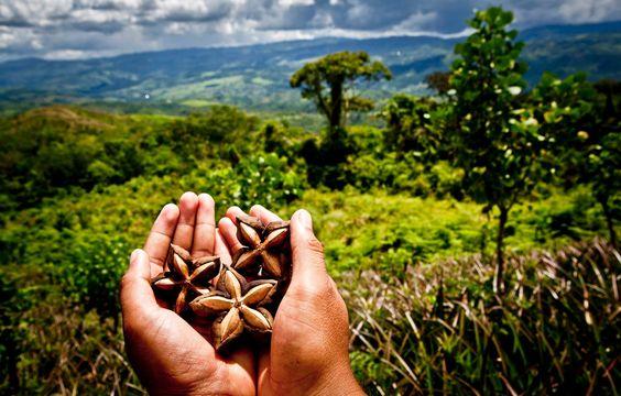aiutare l'amazzonia