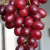 uva_crimson_rossa_biorfarm_frutta